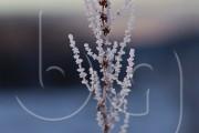 BG_2011_P7F7193