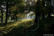 BG_2006_NI4D4396