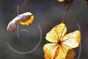 BG_2011_P7F9030