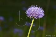 BG_2011_P7F9_5295