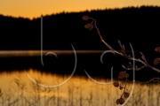 BG_2011_P7F9_7913