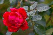 BG_2012_P7F9_3772
