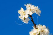 BG_2014_P7F1525