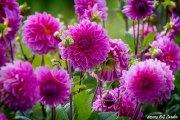 BG_2014_P7F9974