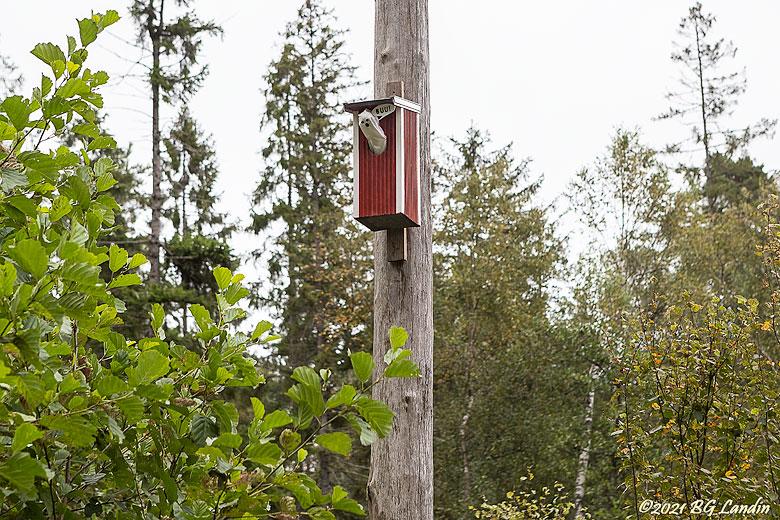 Fågelskrämma i träd