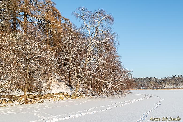 Snö på Anten och trädgrenarna