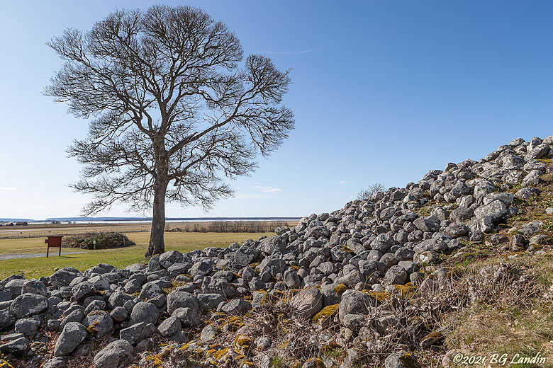 Träd vid Stenkullen