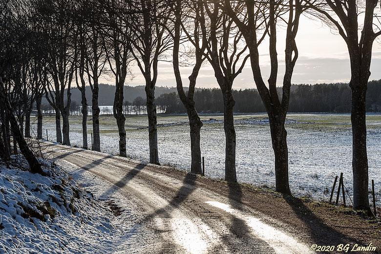 Trädstammar längs isig grusväg