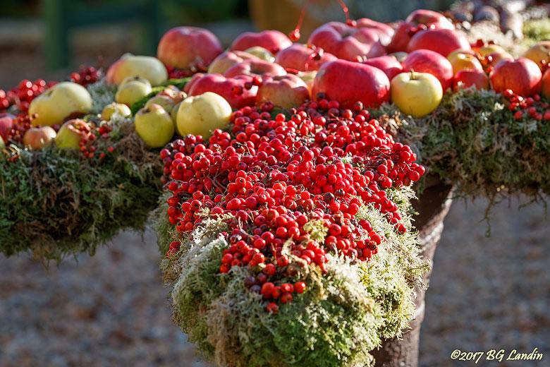 Råvara till rönnbärsgelé