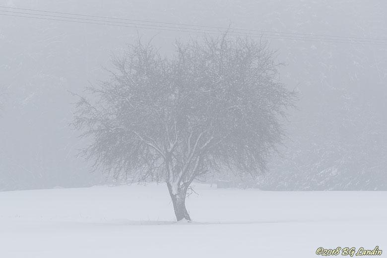 Äppelträd i vinterdis