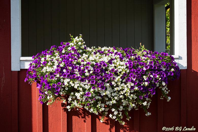 Färgsprakande balkonglåda