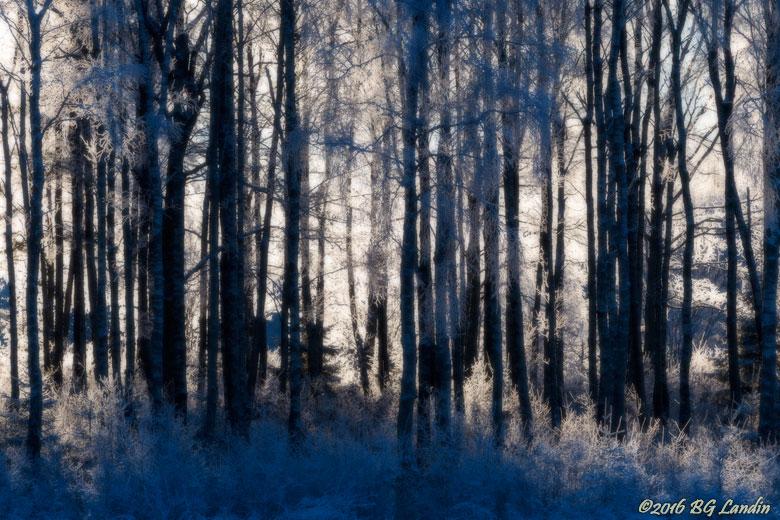 Blånande skog