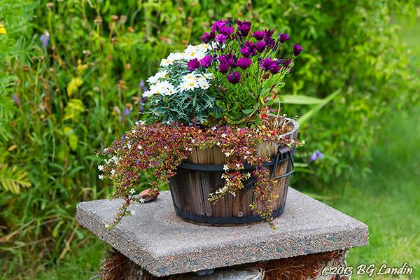 Blomsterprakt i träbalja