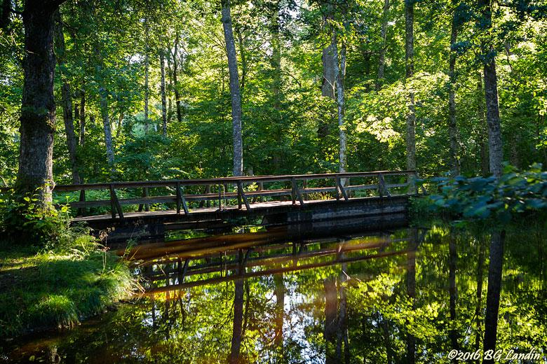 Bro i sommargrönska