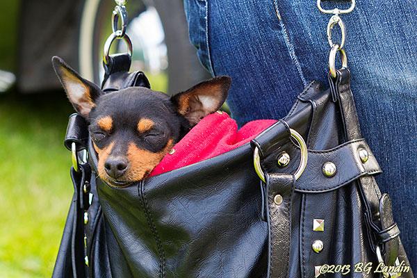 En tupplur i mattes handväska