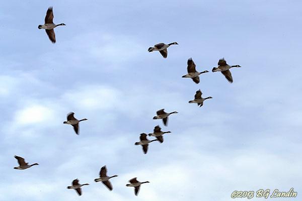 Formationsflygning