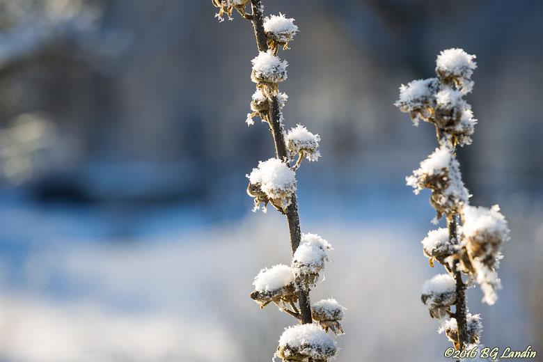 Första snön vintern 2016