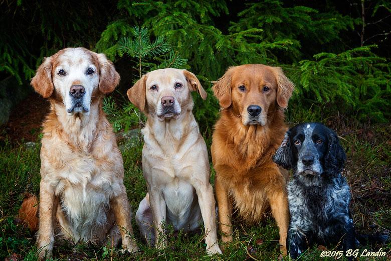 Fyra filurer fotograferade