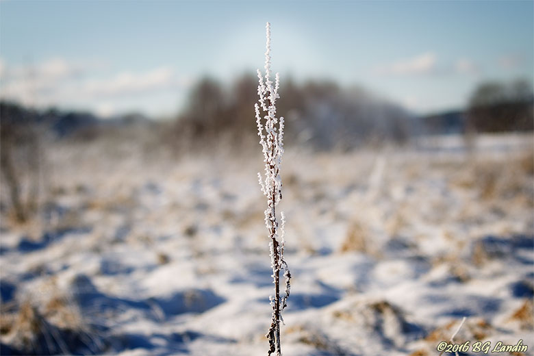 Frostig Gråbo