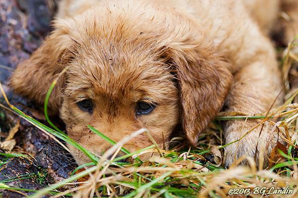 Den lille grävaren vilar ut