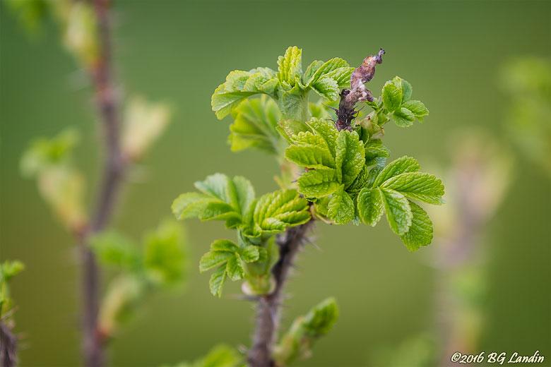 Små gröna sköna blad