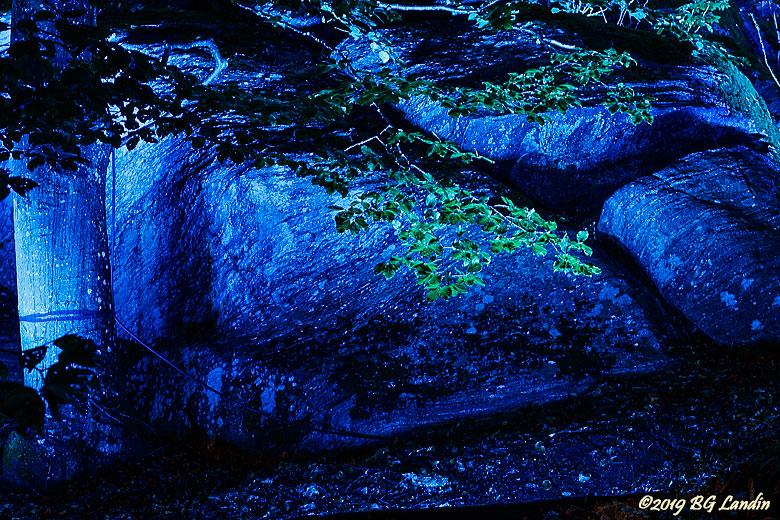 Gröna löv mot blå bakgrund