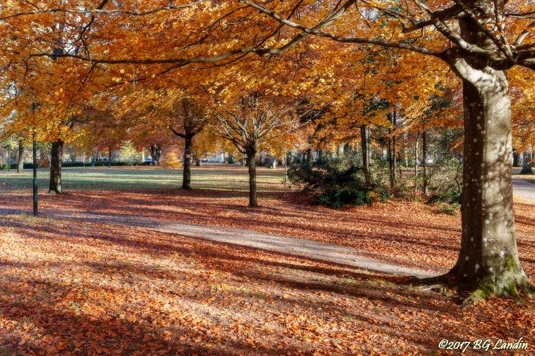 Höst i parken
