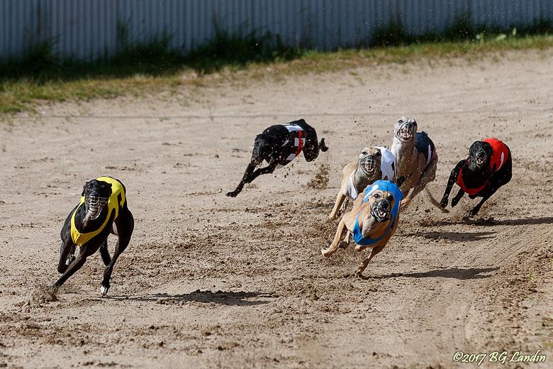 Hundsportens Formel 1