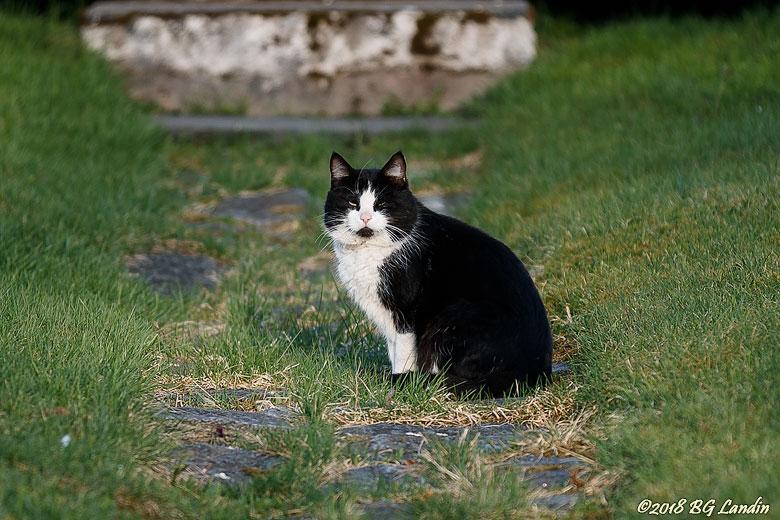 En katt i en trädgård