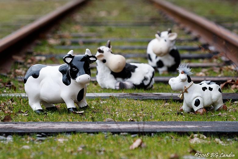 Kor i spåret