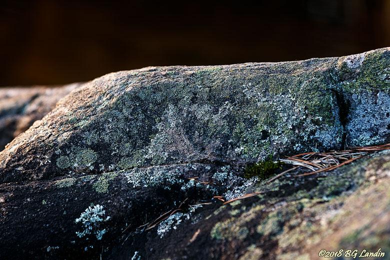 Lavbevuxen sten
