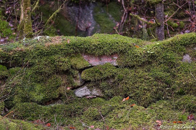 Mossbevuxen stenmur