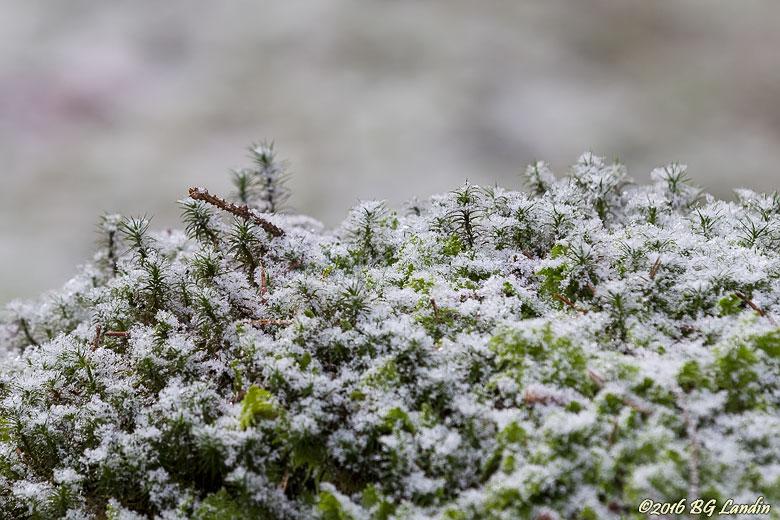 Snöigt och mossigt