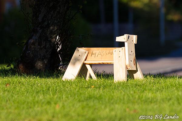 Rondellhunden Hassan