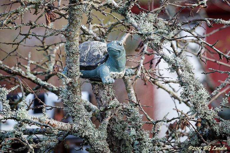 Sköldpadda med högtflygande planer