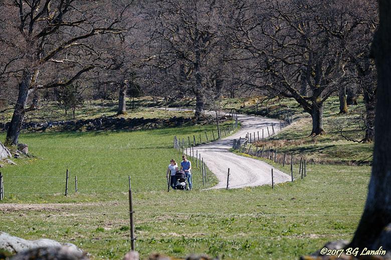 En svensk grusväg