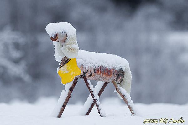 Snöig vovve i rondell
