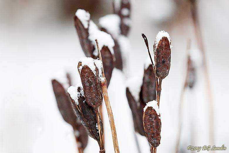 Snöiga kaveldun