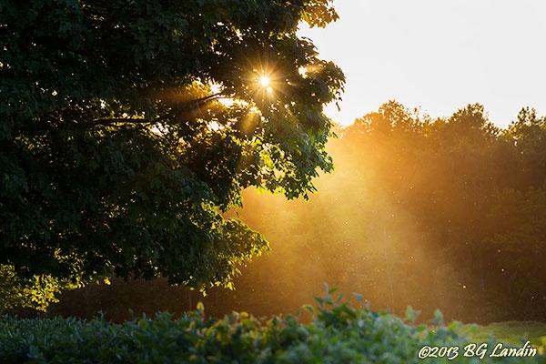 Solstrålar genom lövverk av ek