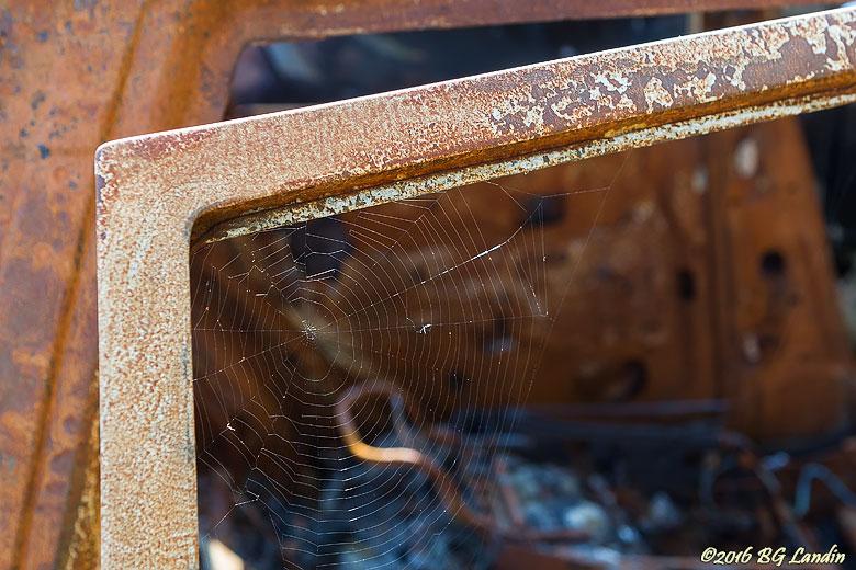 Spindelnät i framdörr