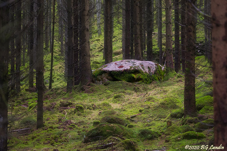 Stenen i storskogen
