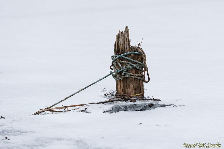Tamp på infrusen träpåle