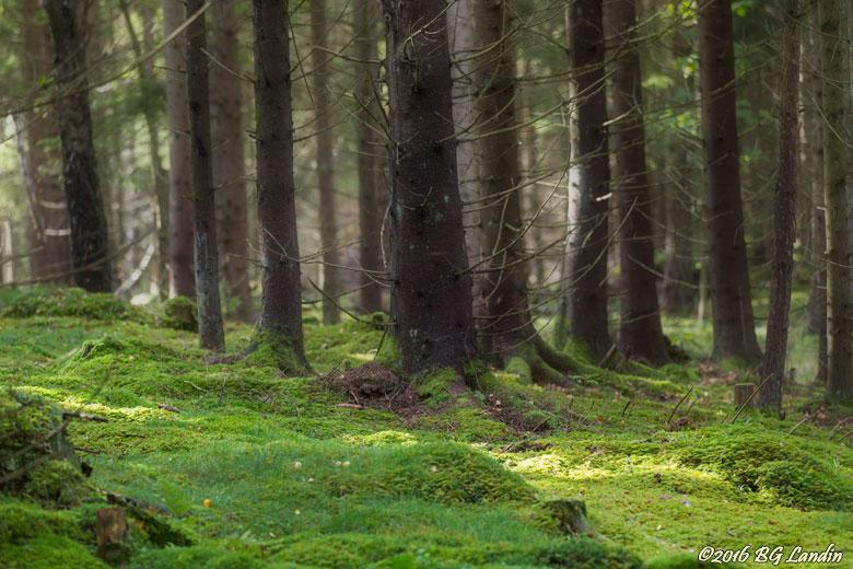 I trollskogen