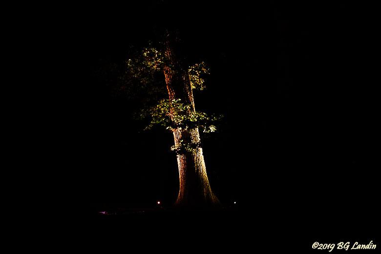 Upplyst träd i The Grove
