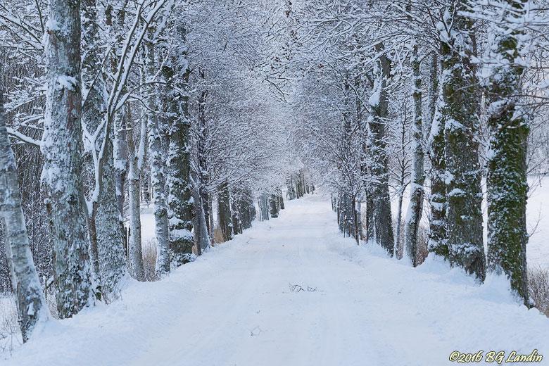 Snöig vinterallé