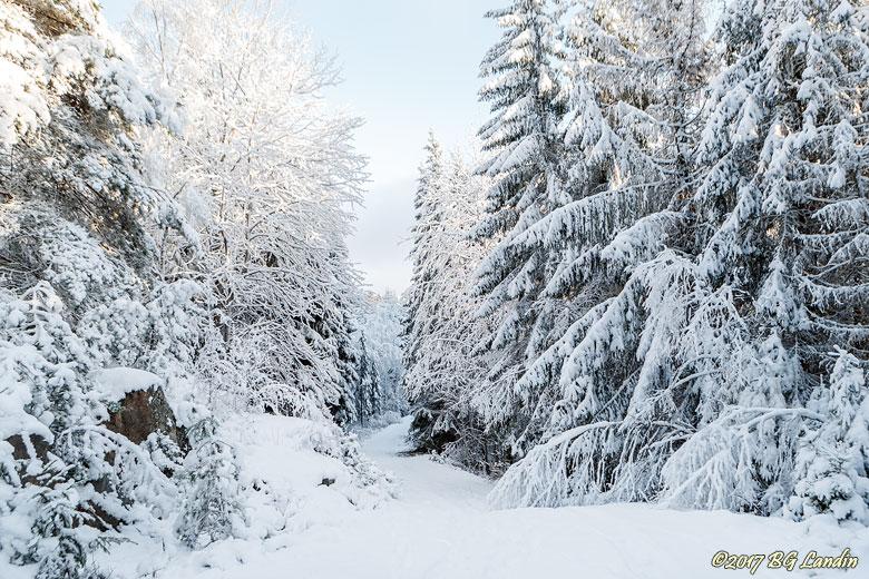 Vårt vackra vita vinterlandet