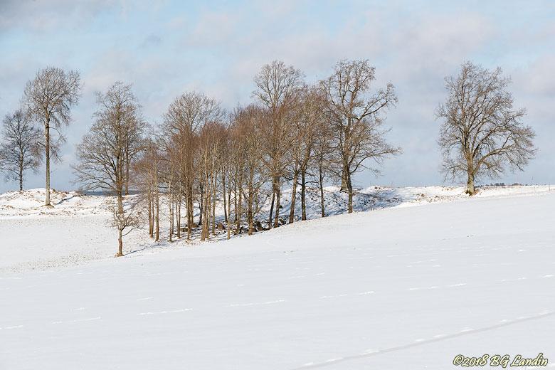 Vinterlandskap med kala träd