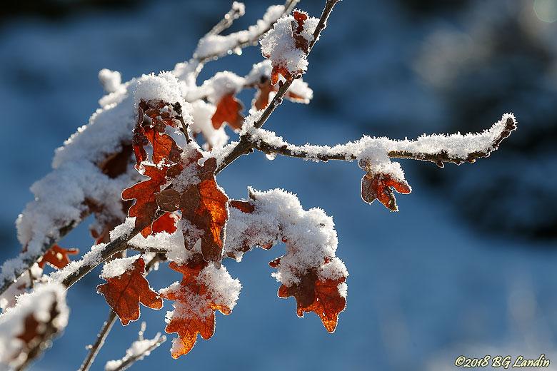 Vinterlöv