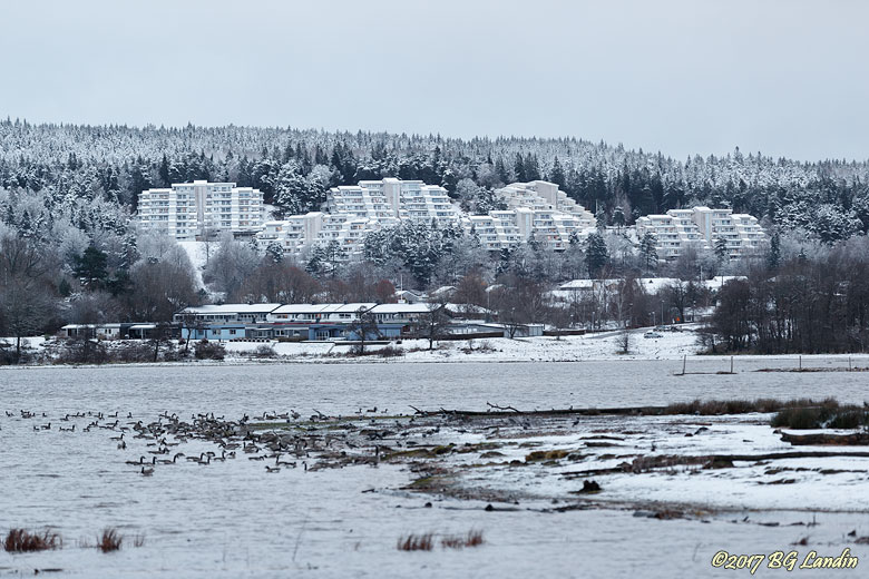 Vita hus mot vit bakgrund