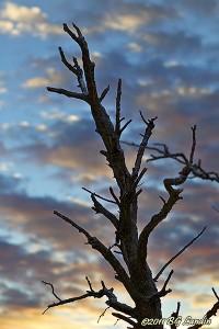 Torrträd mot vinterhimmel
